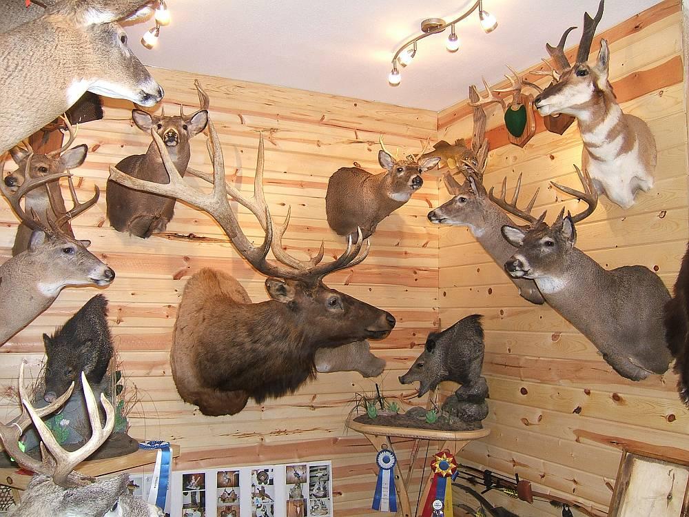 animal house The Funky Bear